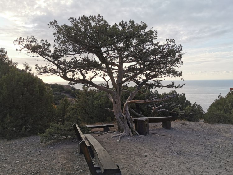 Sochi and Crimea motorcycle tour Rusmototravel, Motorcycle tours in Russia, ancient relic juniper groves